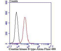 Creatine Kinase MB Antibody in Flow Cytometry (Flow)