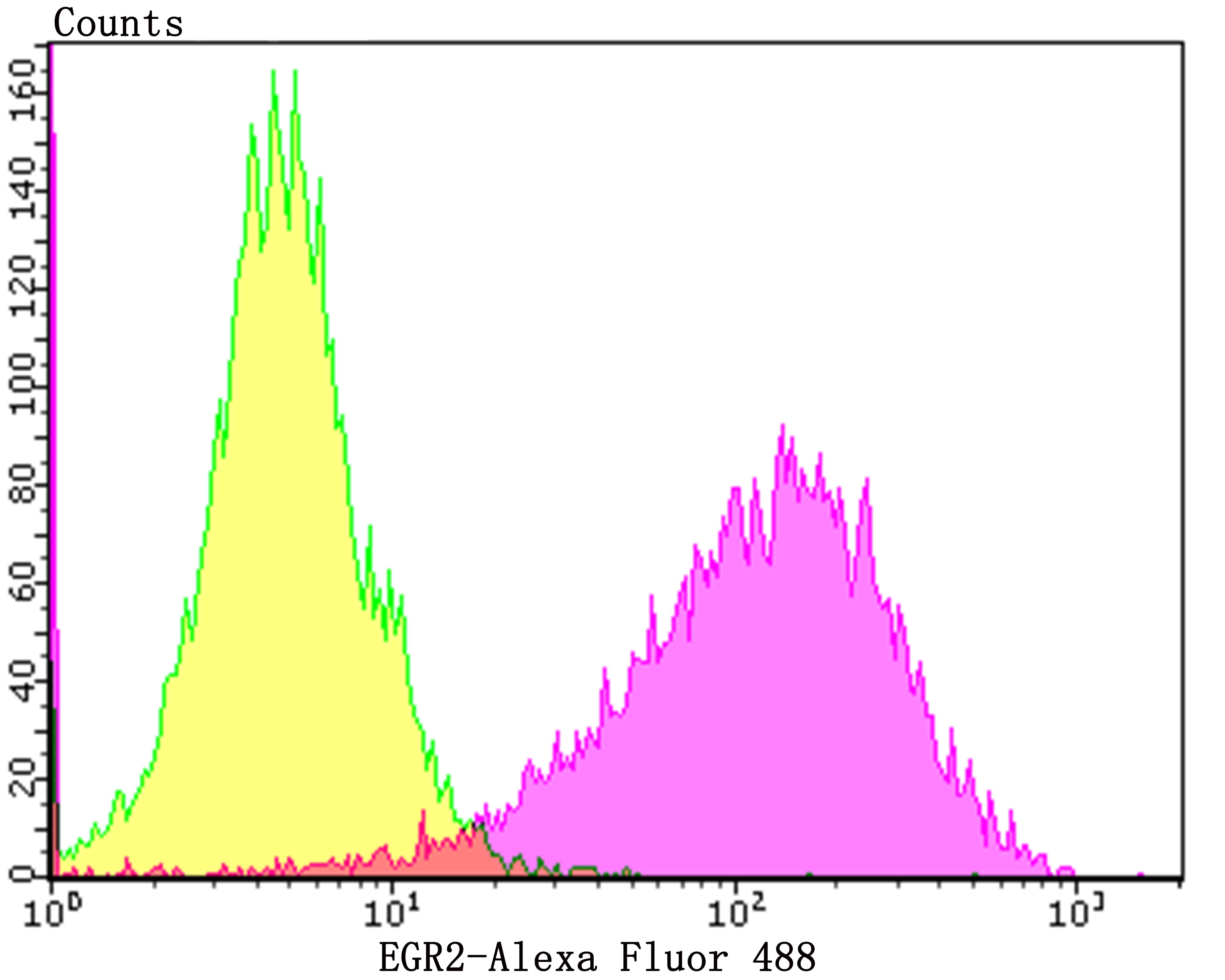 EGR2 Antibody in Flow Cytometry (Flow)
