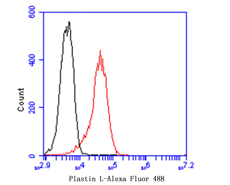 L-Plastin Antibody in Flow Cytometry (Flow)