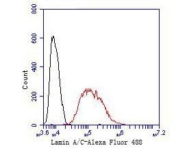 Lamin A/C Antibody in Flow Cytometry (Flow)