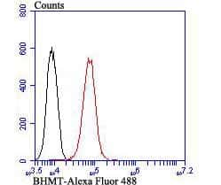 BHMT Antibody in Flow Cytometry (Flow)