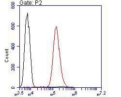 ROBO1 Antibody in Flow Cytometry (Flow)
