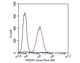 NFKB2 Antibody in Flow Cytometry (Flow)