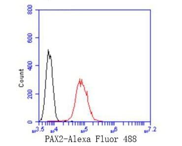 PAX2 Antibody in Flow Cytometry (Flow)