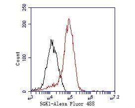 SGK1 Antibody in Flow Cytometry (Flow)
