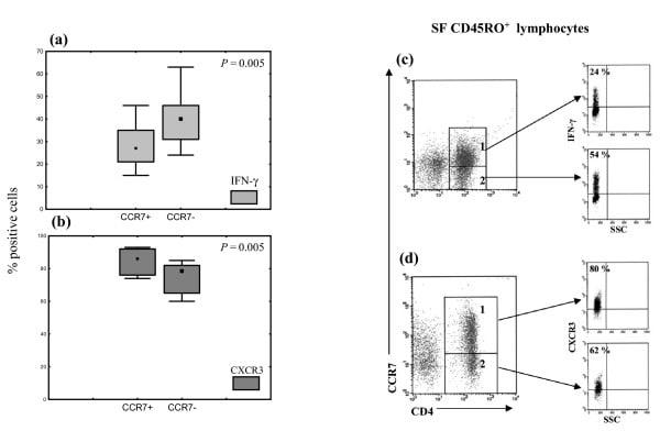 CD4 Antibody (Monoclonal, 4B12)