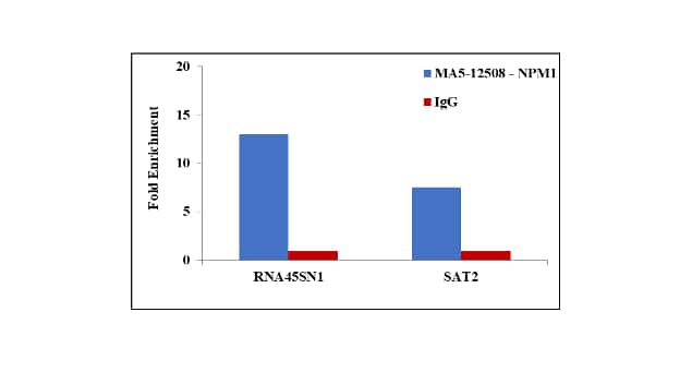 NPM1 Antibody in ChIP assay (ChIP)
