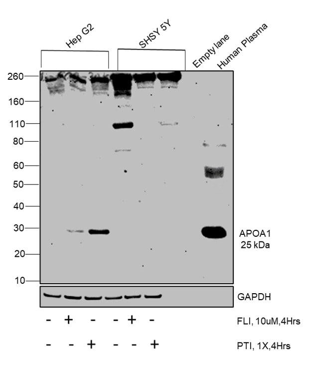ApoA1 Antibody in Relative expression