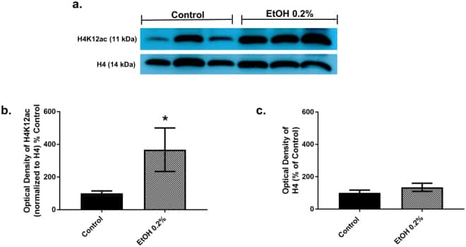 Histone H4 Antibody