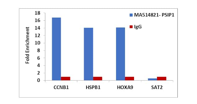 PSIP1 Antibody in Relative expression