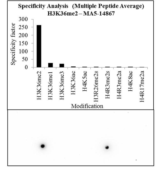 H3K36me2 Antibody in Peptide array (ARRAY)