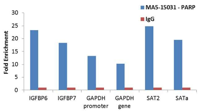 PARP Antibody in Relative expression