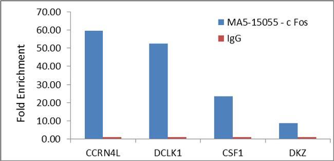 c-Fos Antibody in Relative expression