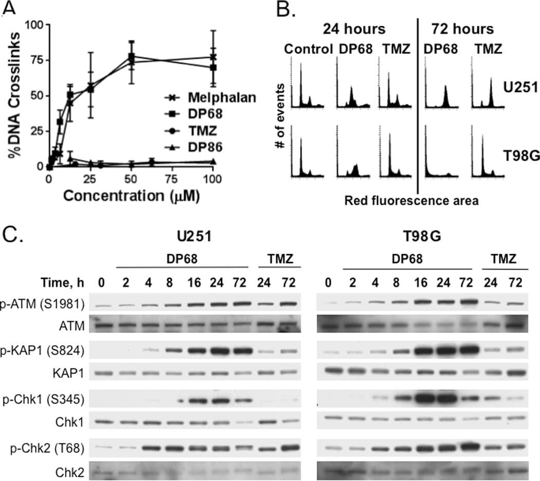 Phospho-CHK1 (Ser345) Antibody
