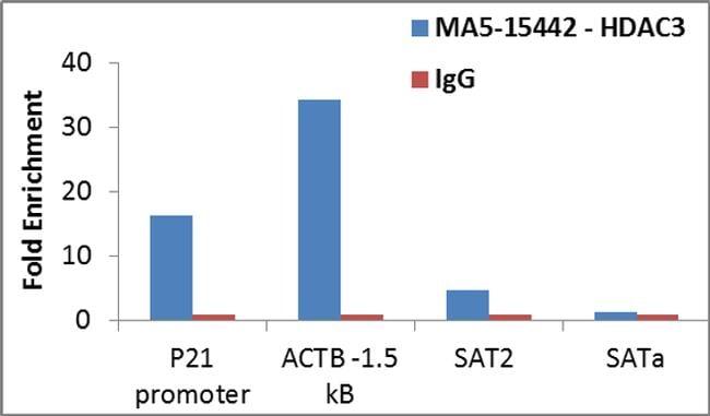 HDAC3 Antibody in Relative expression