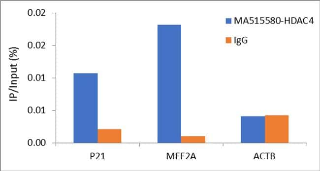 HDAC4 Antibody in Relative expression