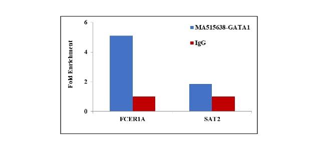 GATA1 Antibody in ChIP assay (ChIP)