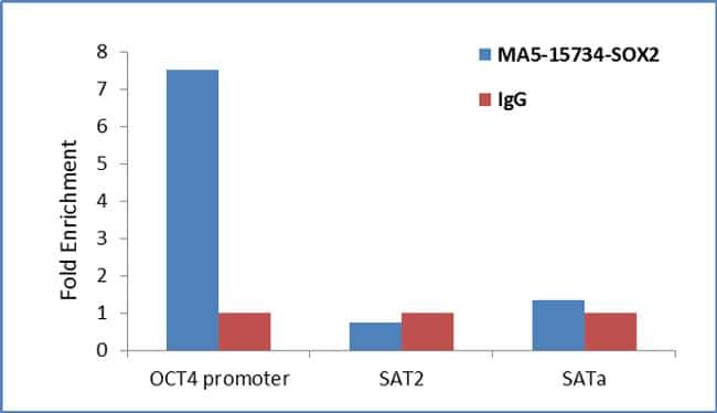 SOX2 Antibody in ChIP assay (ChIP)