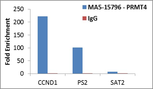 PRMT4 Antibody in ChIP assay (ChIP)