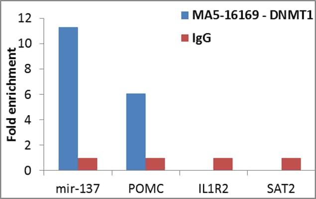 DNMT1 Antibody in ChIP assay (ChIP)
