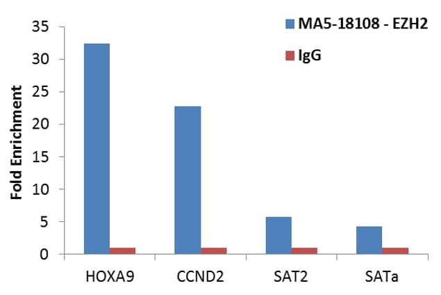 EZH2 Antibody in ChIP assay (ChIP)