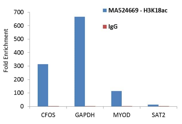 Acetyl-Histone H3 (Lys18) Antibody in ChIP assay (ChIP)