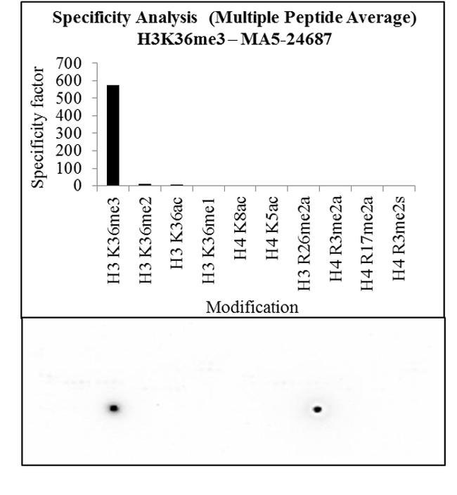 H3K36me3 Antibody in Peptide array (ARRAY)