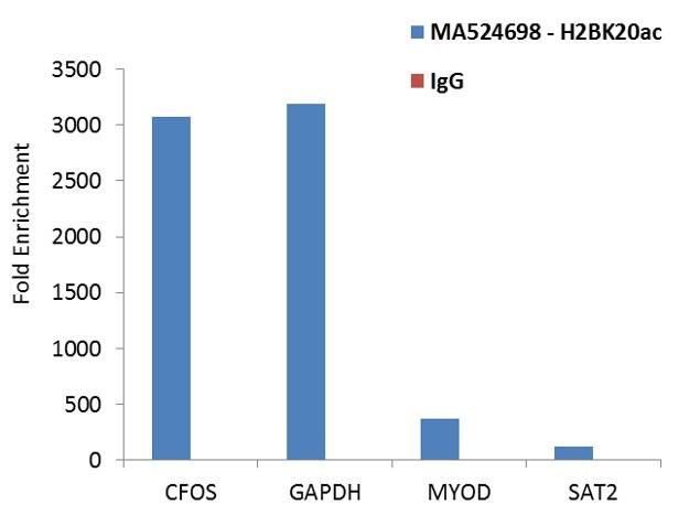 H2BK20ac Antibody in Relative expression