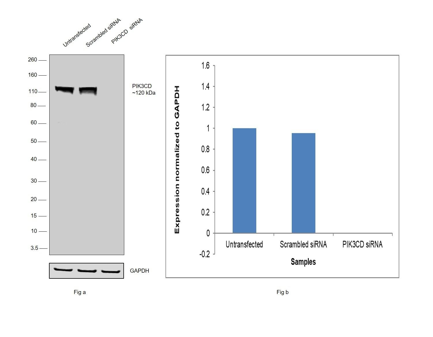 PIK3CD Antibody in Knockdown