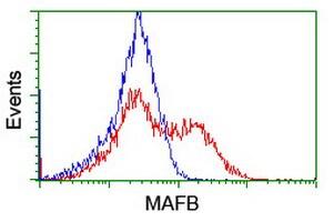 MAFB Antibody in Flow Cytometry (Flow)