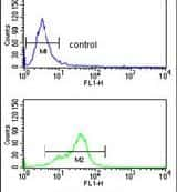 MFAP5 Antibody in Flow Cytometry (Flow)