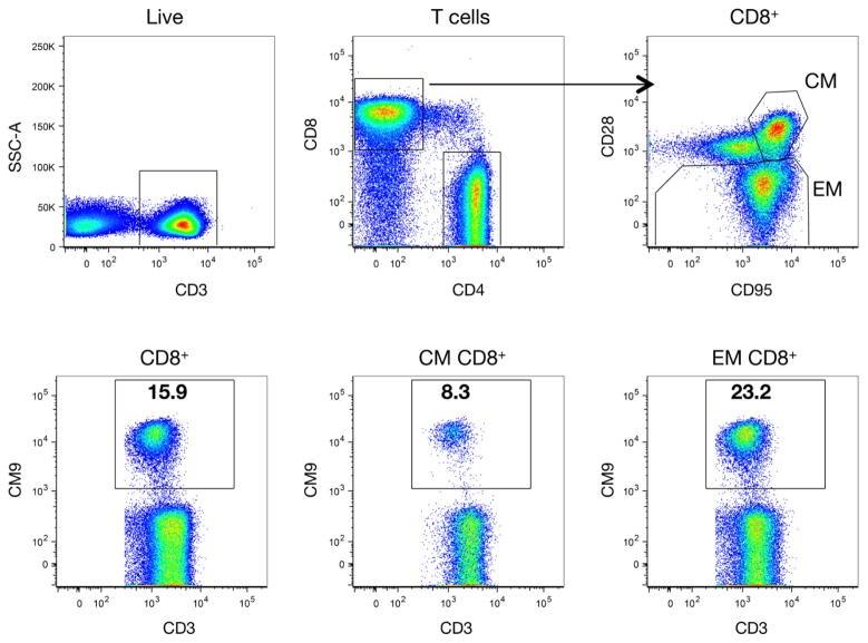CD8 Antibody
