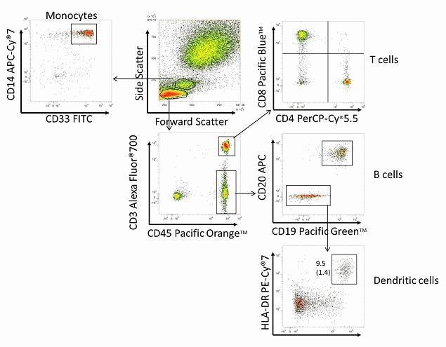 CD8 Antibody in Flow Cytometry (Flow)