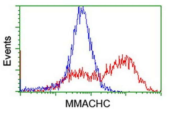 MMACHC Antibody in Flow Cytometry (Flow)