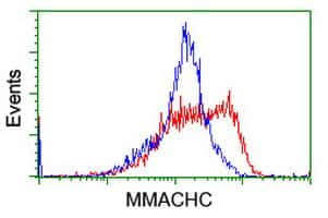 MMACHC Antibody in Flow Cytometry (Flow)