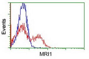 MRI1 Antibody in Flow Cytometry (Flow)