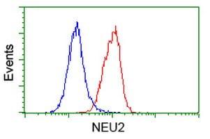NEU2 Antibody in Flow Cytometry (Flow)