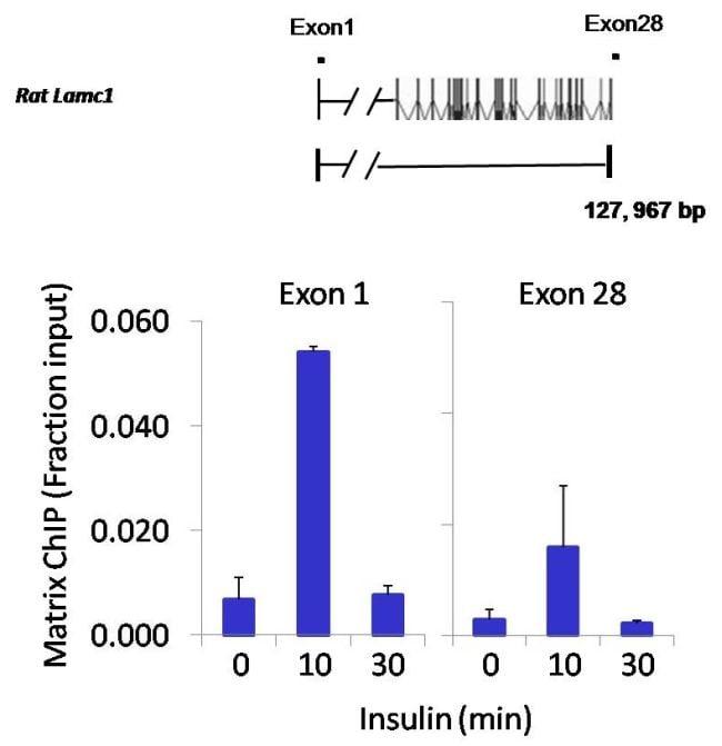 NFATC2 Antibody in ChIP assay (ChIP)