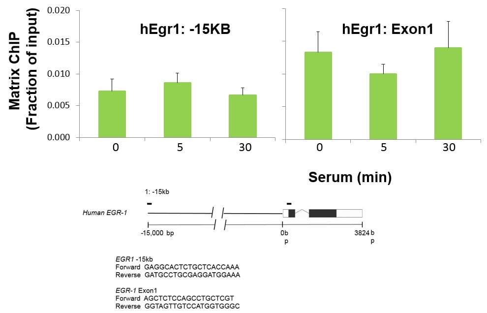 NFkB p50 Antibody in ChIP assay (ChIP)