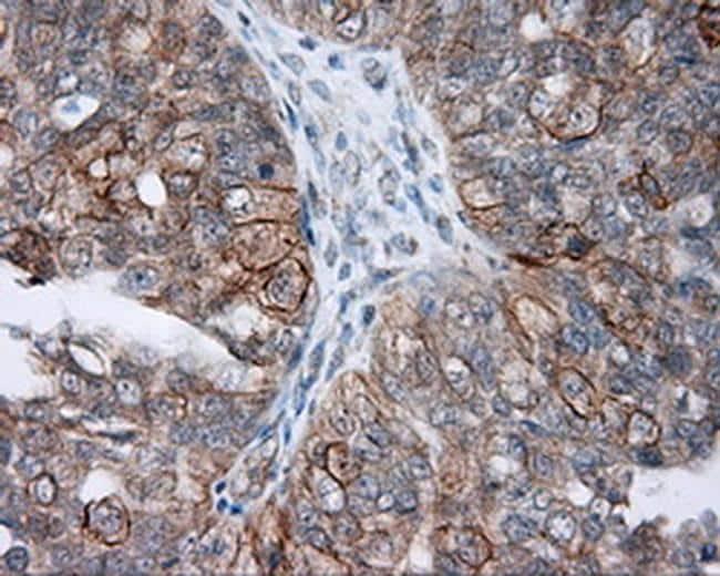 NME4 Antibody in Immunohistochemistry (Paraffin) (IHC (P))
