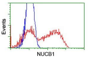 NUCB1 Antibody in Flow Cytometry (Flow)