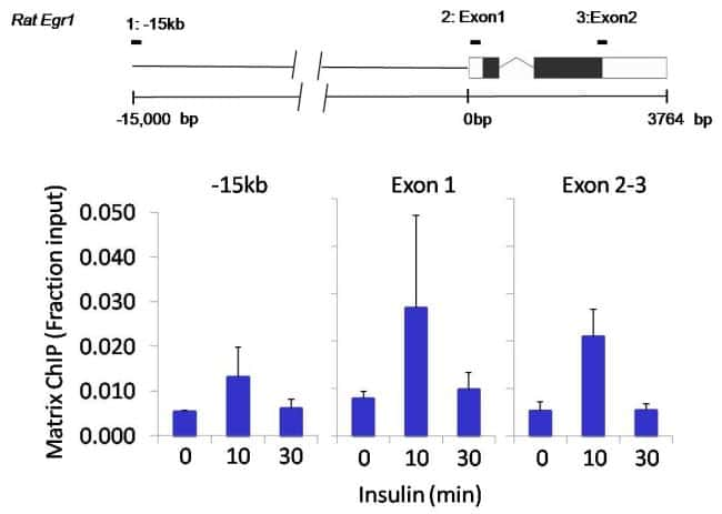 Nanog Antibody in ChIP assay (ChIP)
