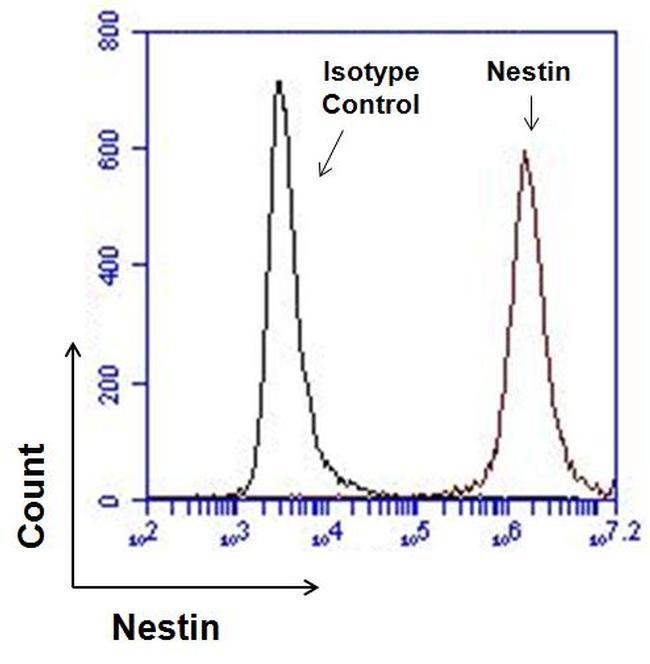 Nestin Antibody in Flow Cytometry (Flow)