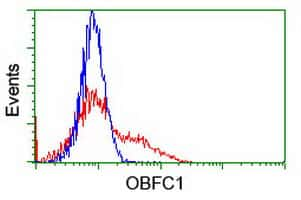 OBFC1 Antibody in Flow Cytometry (Flow)