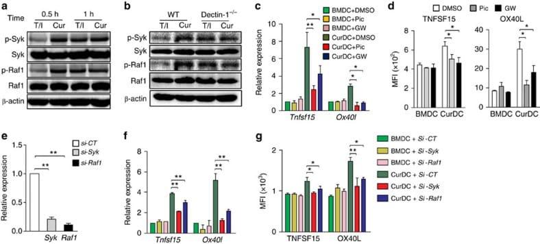 CD252 (OX40 Ligand) Antibody