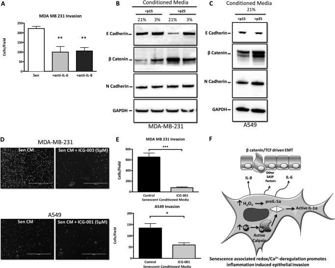 IL-6 Antibody (P620)
