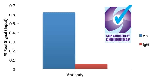 Androgen Receptor Antibody in ChIP assay (CHIP)