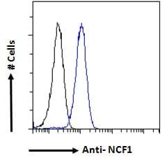 p47phox Antibody in Flow Cytometry (Flow)