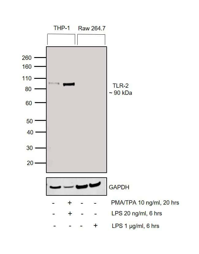 TLR2 Antibody in Cell treatment