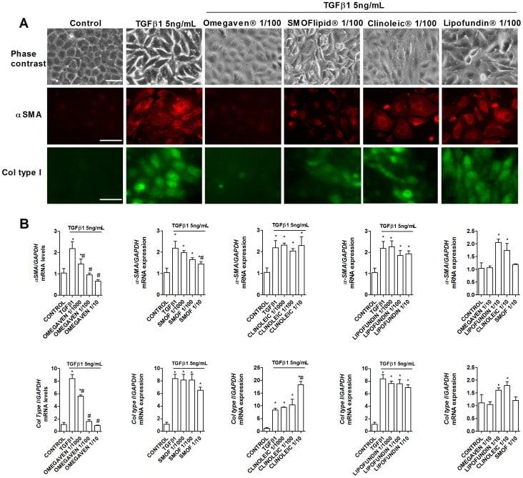 Collagen I Antibody